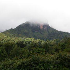 Manejo de emergencia de incendios forestales en las Montañas Bale