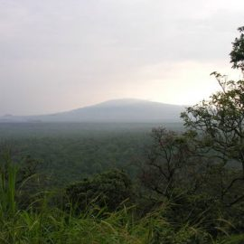 Emergency response to a tragic attack in Virunga National Park