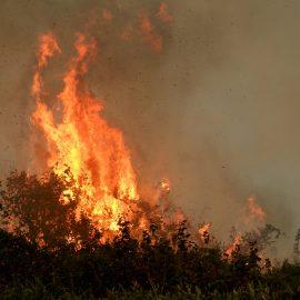 Reforzando la lucha contra incendios para evitar la destrucción en el Pantanal de Brasil